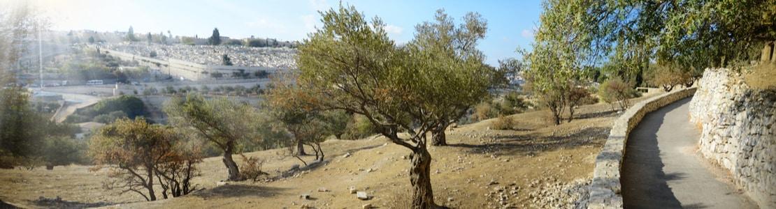 Garden of Gethsemane, Jerusalem   Bein Harim Tours